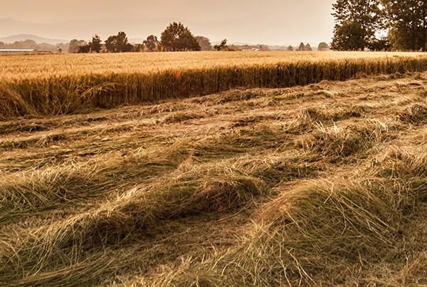 Cardrona field